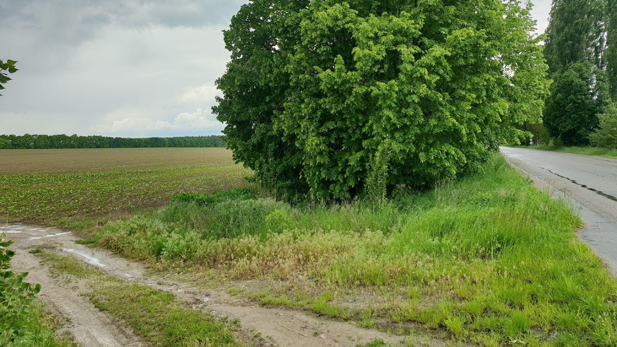 Земельный участок W-6038856, Заборье - Фото 4